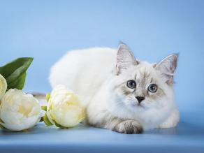 Anuncian primer concurso oficial de gatos