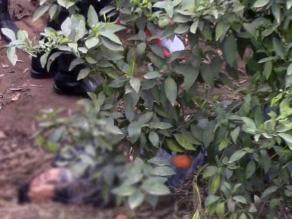 Huaral: delincuente muere tras enfrentamiento con la policía