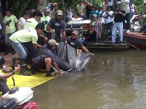 Loreto: pobladores rescatan a manatí bebé atrapado en una red de pesca