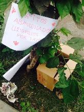 Trujillo: gatos abandonados necesitan adopción