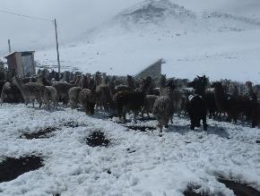 Ayacucho: pobladores de Uchuraccay afectados por fuertes nevadas