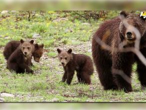 Alaska: Intensa búsqueda de un hombre disfrazado de oso
