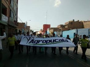 Chiclayo: gran congestión vehicular por pasacalle de empresa Agropucalá
