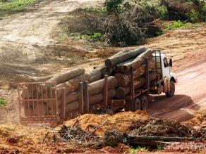 Pucallpa: madereros protestan contra erradicación de la tala ilegal