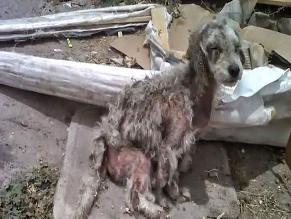 Centro de Lima: can se encuentra abandonada en un departamento