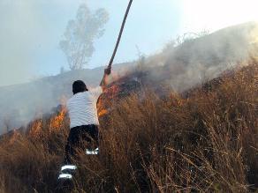 Andahuaylas: voraz incendio destruye extensas plantaciones forestales