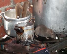 Detectan alto índice de roedores en cuatro mercados de Chimbote