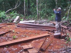 Ucayali: madereros anuncian huelga por operativos contra la tala