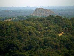 Lambayeque: talan árboles en zona protegida del Santuario Bosque de Pómac