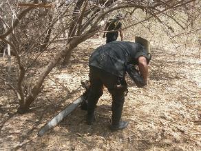 Tumbes: pobladores talan manglares para construir viviendas