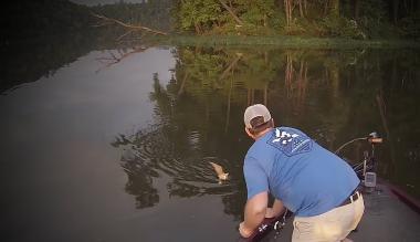 Gatos nadaron en un río para ser rescatados por pescadores en EE. UU