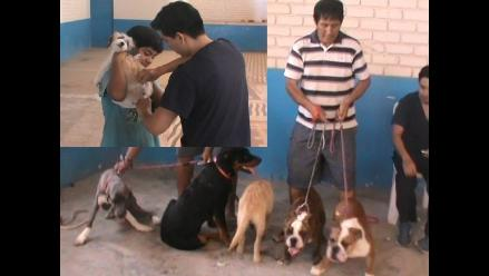 Lambayeque: realizarán campaña para vacunar a unos 80 mil canes
