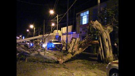 Trujillo: árbol es derribado por conductor en presunto estado de ebriedad