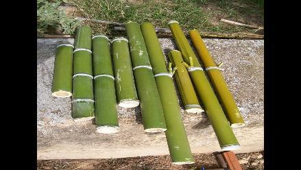 Chiclayo: Con bambú levantarán carpas para damnificados del FEN