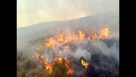 Junín: Vicuñas se salvan de morir quemadas en incendio de pastizales