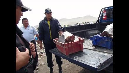 Chimbote: comerciantes preocupados por escasez de pescado ante FEN