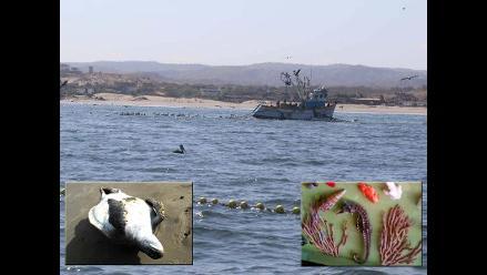 Piura: denuncian depredación de especies protegidas en mar de Máncora
