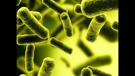 Investigadores proponen método para reducir bacteria E.coli en alimentos