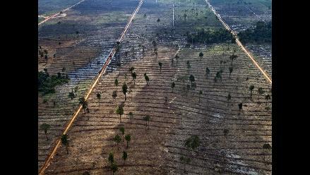 FAO: En 25 años se perdió un área de bosques del tamaño de Sudáfrica