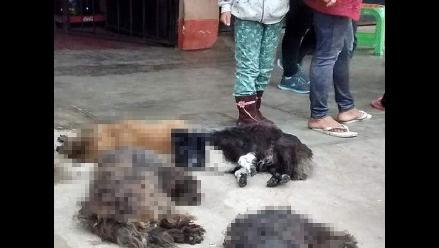VES: Delincuentes envenenan perros para desmantelar automóviles