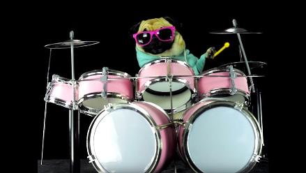 YouTube: Un pug
