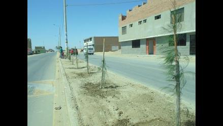 Déficit de árboles llega a 9 millones en Arequipa