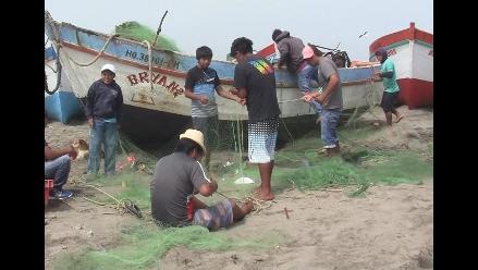 Lambayeque: lobos marinos causan cuantiosas pérdidas a pescadores