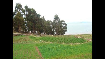 Puno: productores de coca piden cultivos alternativos en Nojonunta