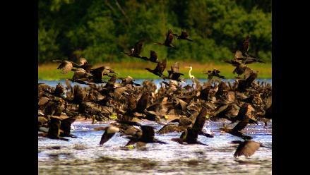 Áreas naturales protegidas de Perú serán monitoreadas por satélite