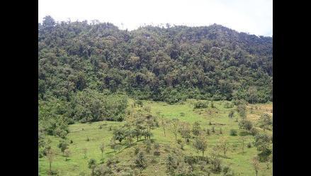 Pataz: denuncian a cuatro personas por destrucción de bosque