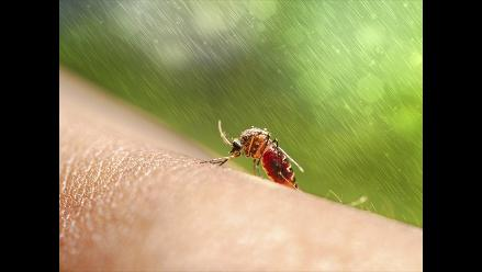 Taiwán: más de 10 000 casos de dengue en la ciudad de Tainán