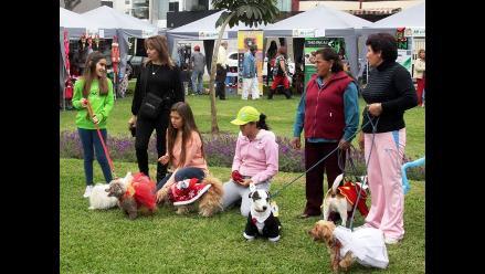 Surco elige este domingo a sus reyes caninos de la primavera