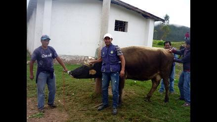 Piura: Senasa vacuna a todo el ganado en zonas afectadas con Ántrax