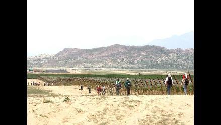 Chiclayo: más de 4 mil hectáreas se han sembrado hasta ahora en Olmos
