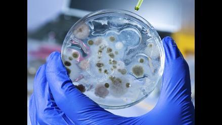 Ántrax: conoce más de la enfermedad que afecta a Piura