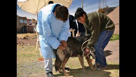 Cusco: Más de 1 700 personas fueron mordidas por canes segun salud