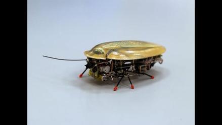 Crean una cucaracha robot para localizar vidas humanas tras un terremoto