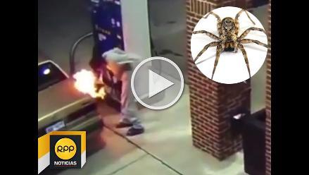 Hombre casi hace explotar una gasolinera al tratar de matar una araña