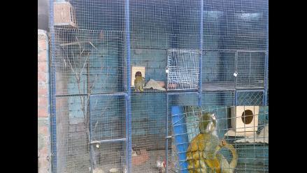WhatsApp: reportan maltrato animal en restaurante de Huachipa