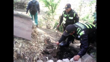 Huancayo: serenos rescatan a seis cachorros que fueron enterrados vivos