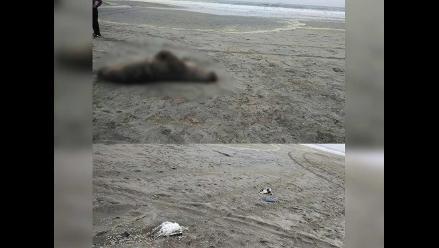 WhatsApp: aves y un lobo marino son hallados muertos en un balneario de Lurín