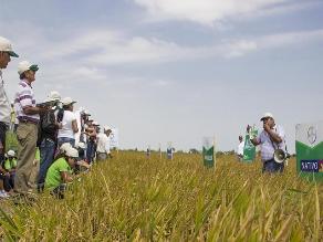 Piura: más del 50% de cultivos de la región en riesgo por Fenómeno El Niño