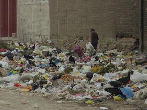 Chiclayo: gallinazos y ratas inundan calles por acumulación de basura