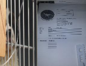 Surco: denuncian venta de perro con virus