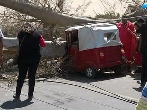 Ica: mototaxista pierde la vida tras caída de árbol