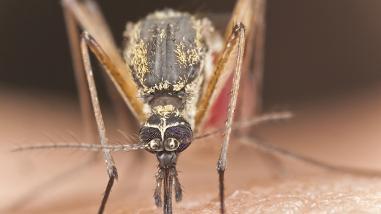 Fenómeno El Niño: dengue, dermatitis y conjuntivitis serán frecuentes
