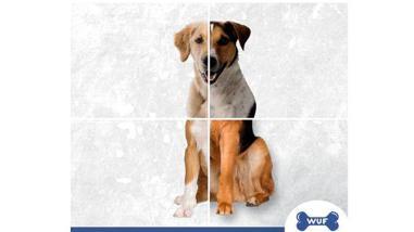Wuf.pe: plataforma para rescatar a millones de perros de calles peruanas