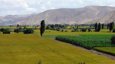Mollendo: esperan llegada de ministro de Agricultura para inauguración de obras