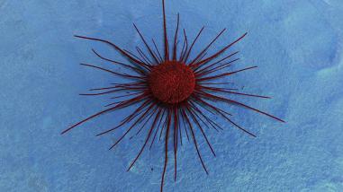 Nanomedicina abre puertas en la lucha contra el cáncer
