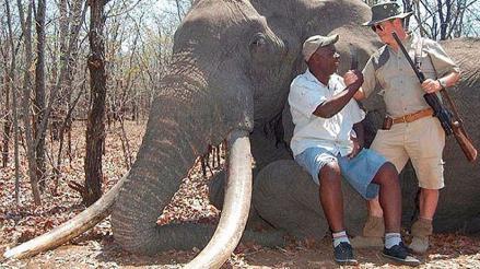Zimbabue: Elefante de casi 60 años es asesinado por cazadores